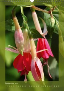 Fascinating Fuchsias (Wall Calendar 2015 DIN A3 Portrait)