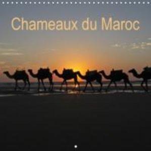 Chameaux du Maroc (Calendrier mural 2015 300 × 300 mm Square)