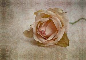 Premium Textil-Leinwand 45 cm x 30 cm quer La vie en rose