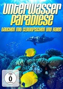 Unterwasserparadies: Tauchen mit Clownfisch & Hai