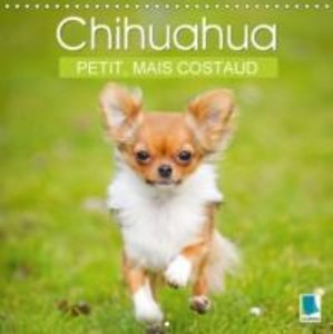 Calvendo: Chihuahua : Petit, Mais Costaud