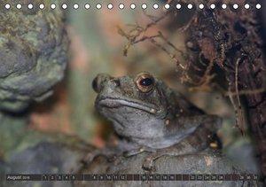 Besondere Tierwelt (Tischkalender 2016 DIN A5 quer)