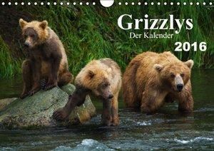 Grizzlys - Der Kalender (Wandkalender 2016 DIN A4 quer)