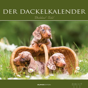 Der Dackelkalender 2017 - Bildkalender