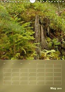 Silent World Forest Floor