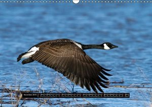 CANADA GOOSE / UK-Version (Wall Calendar 2015 DIN A3 Landscape)