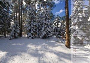 Unser Wald - Magische Sichten in norddeutsche Wälder / Geburtsta
