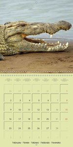 Crocodile and Co. (Wall Calendar 2015 300 × 300 mm Square)