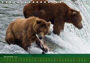 Der Bärenkalender 2016 (Tischkalender 2016 DIN A5 quer)
