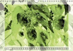Monochrome - Floral Structures (Wall Calendar 2015 DIN A4 Landsc