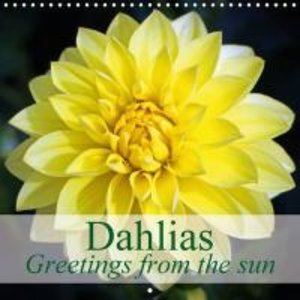 Dahlias - Greetings from the sun (Wall Calendar 2015 300 × 300 m