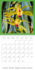 Wonderful Orchids (Wall Calendar 2018 300 × 300 mm Square)