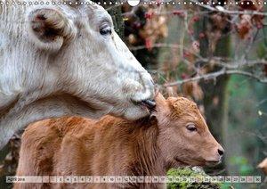Glückliche Kühe auf saftigen Wiesen