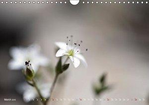 Colours of open fields (Wall Calendar 2015 DIN A4 Landscape)