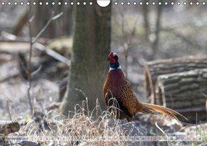 Emotional Moments: The pheasants. UK-Version (Wall Calendar 2015