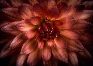 Sonate - Visuelle Musik der Blumen (Tischaufsteller DIN A5 quer)