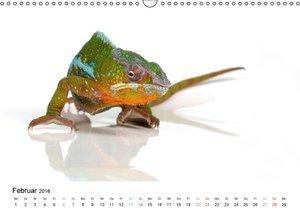 Der kleine Gecko und seine Freunde (Wandkalender 2016 DIN A3 que