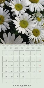Snow-White - Floral Beauties (Wall Calendar 2015 300 × 300 mm Sq