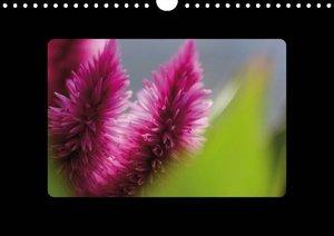 Blomenfrünn (Posterbuch DIN A4 quer)