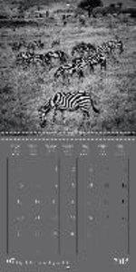 LES NANIMOS - Safari au Kenya (Calendrier mural 2015 300 × 300 m