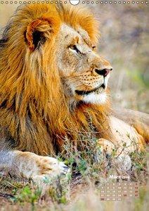 Raubkatzen: Jäger auf leisen Pfoten (Wandkalender 2016 DIN A3 ho
