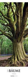 Bäume 2017 Streifenkalender XXL