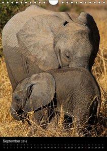 Sanfte Riesen - Afrikas Elefanten (Wandkalender 2016 DIN A4 hoch