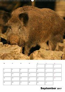 Der wildschweinische Terminplaner