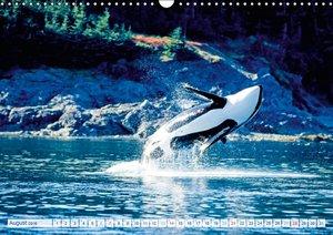 Orcas: Schwarz-weiße Giganten (Wandkalender 2016 DIN A3 quer)