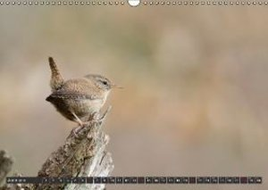 Feathered Artists - Birds in our gardens (Wall Calendar 2015 DIN
