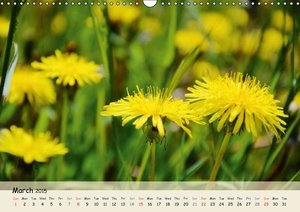 Pretty Daisies and Dandelions / UK-Version (Wall Calendar 2015 D