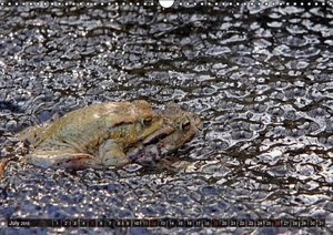 The Frog Pond / UK-Version (Wall Calendar 2015 DIN A3 Landscape)