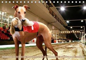 Schnell, schneller - Hunderennen (Tischkalender 2016 DIN A5 quer