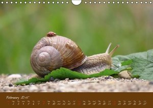 Doberstein, J: At a Snail's Pace Through the Year