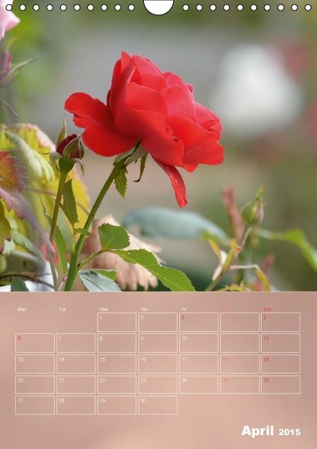 Delicate Beauties - Magnificent Roses (Wall Calendar 2015 DIN A4 - zum Schließen ins Bild klicken