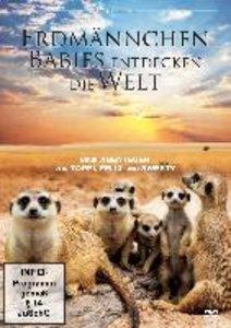 Erdmännchen-Babies entdecken die Welt
