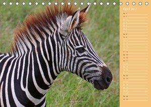 Afrikas Kinderstube (Tischkalender 2017 DIN A5 quer)