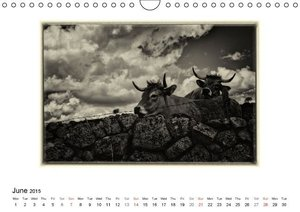 Aubrac - a land of transhumance (Wall Calendar 2015 DIN A4 Lands