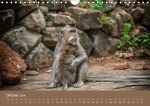 Ich glaub mich laust der Affe (Wandkalender 2016 DIN A4 quer)