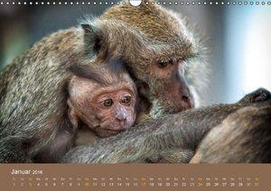 Ich glaub mich laust der Affe (Wandkalender 2016 DIN A3 quer)