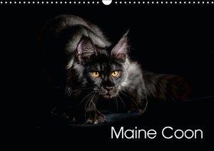 Maine Coon (Wall Calendar 2015 DIN A3 Landscape)