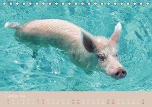 Stanzer, E: Schwimmende Schweine auf den Bahamas! (Tischkale