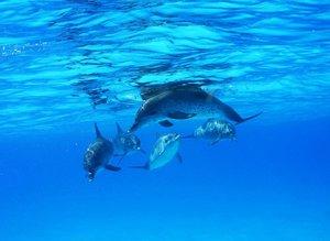 IMAX - Delfine und Wale 3D