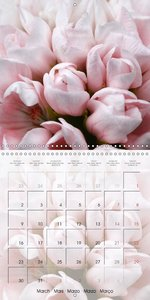 Fascinating Pelargonium (Wall Calendar 2015 300 × 300 mm Square)