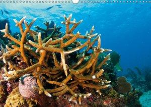 Zerbrechliche Paradiese - Korallen (Posterbuch DIN A4 quer)