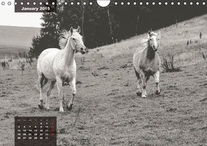 lively horses on the Crazy Horse Ranch (Wall Calendar 2015 DIN A