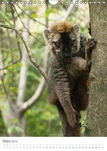 Madagaskars wundersame Tierwelt - die Reise geht weiter (Wandkal
