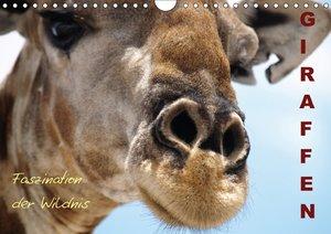Giraffen ? Faszination der Wildnis