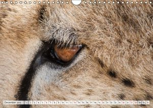 Emotional Moments: Cheetah UK Version (Wall Calendar 2015 DIN A4