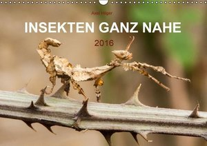INSEKTEN GANZ NAHE (Wandkalender 2016 DIN A3 quer)